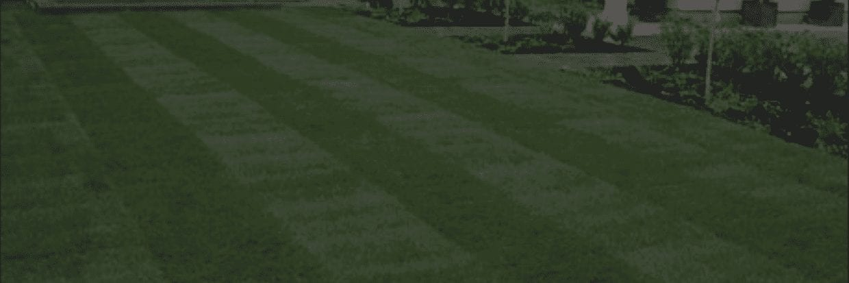New Look Landscapes - Services: Sod, Gardens & Trees